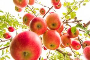 Consumo diário de maçã pode reduzir em até 20% a gordura corporal (Getty Images)