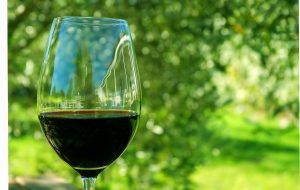 Harmonizar vinhos para o almoço de Páscoa é o assunto de hoje