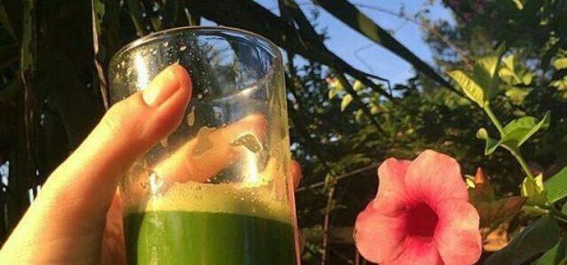 Detox e plantas medicinais em chás e sucos